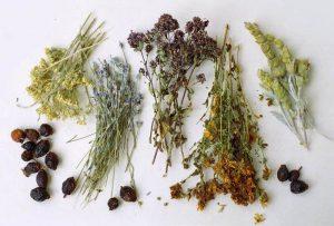 Maigrir par les plantes et rester mince