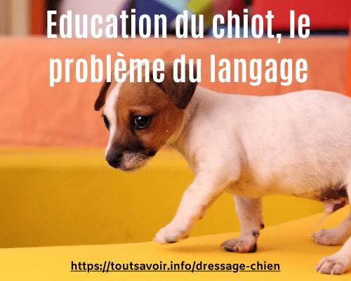 Education du chiot, le problème du langage